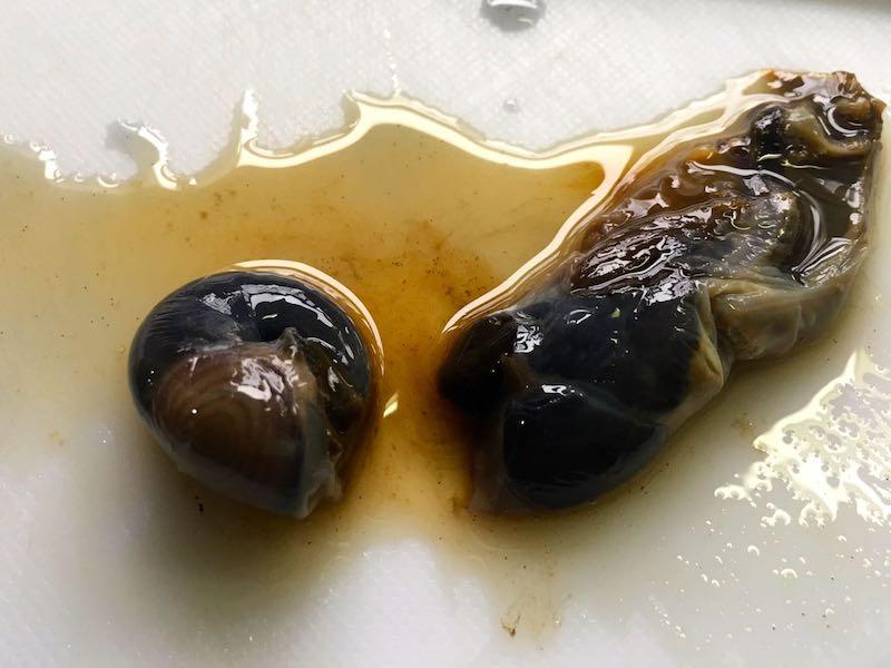 サザエのエスカルゴバター焼き17
