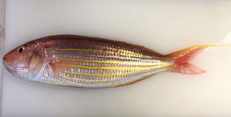 魚のテリーヌの作り方14